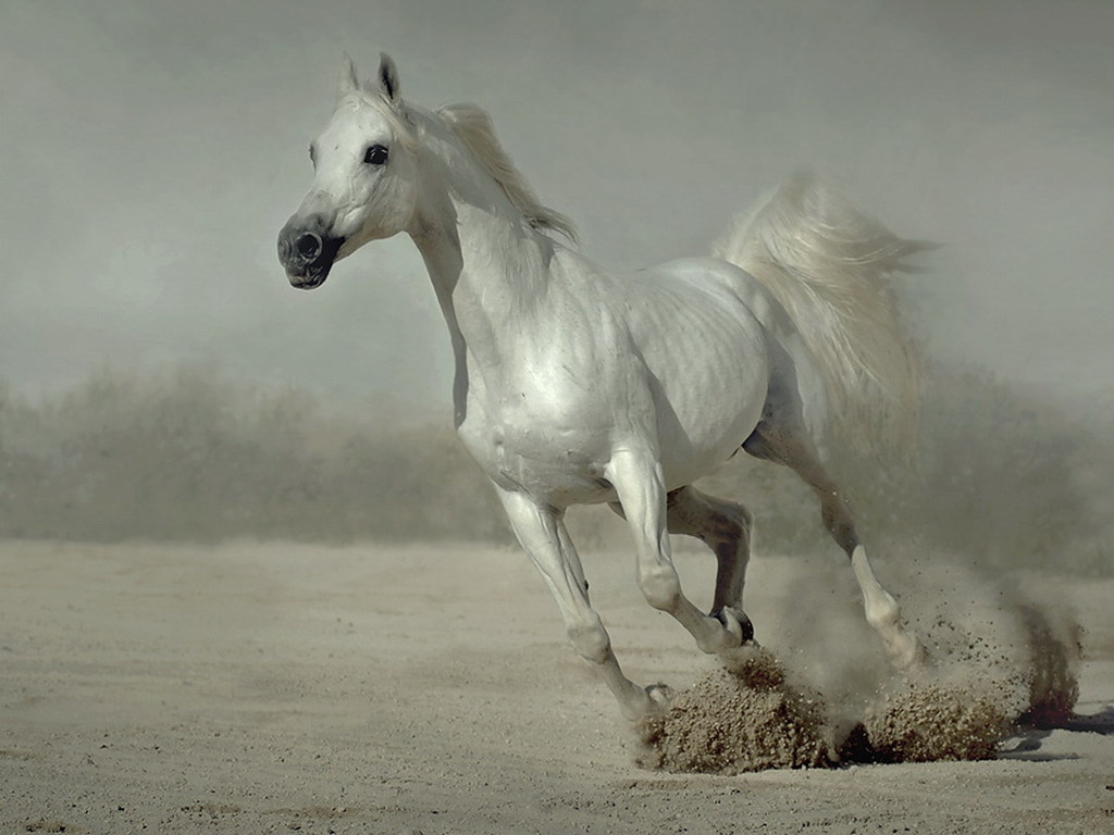 Best Wallpaper Horse Silver - 21a50-horse  Collection_964483.jpg